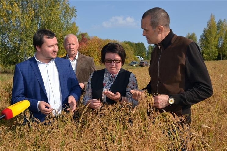Урожайность зерновых в хозяйствах Чувашской Республики достигает 49 ц с гектара