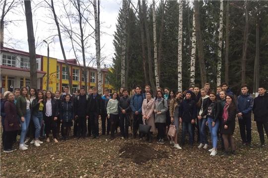 Ибресинский район присоединился к ежегодной Всероссийской акции «Дерево Победы!»