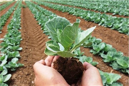 Аграрии сегодня могут застраховать урожай на выгодных условиях