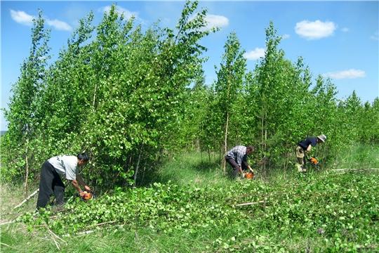 В Ибресинском районе продолжается работа по освоению залежных земель
