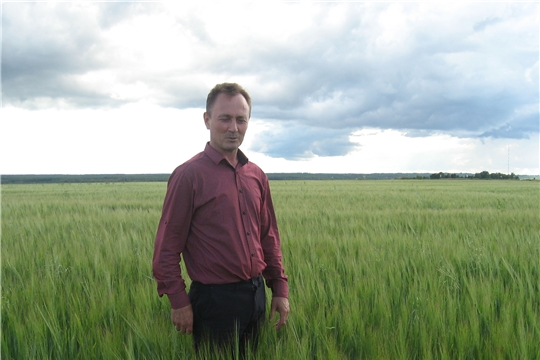 В Ибресинском районе в сельскохозяйственных предприятиях продолжаются сезонные полевые работы