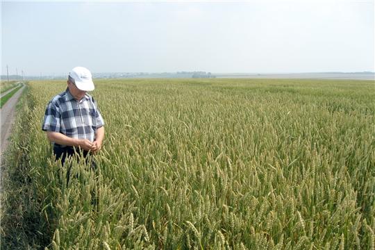 Хозяйства Ибресинского района готовы к уборке нового урожая