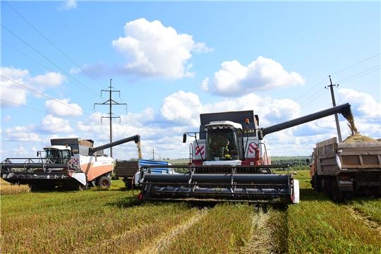 В пяти хозяйствах  Ибресинского района приступили к уборке зерновых культур.