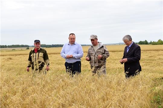 В Ибресинском районе уборка зерновых культур идет полным ходом