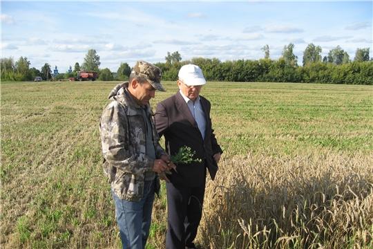 В Ибресинском районе убрано 53,9 % зерновых культур