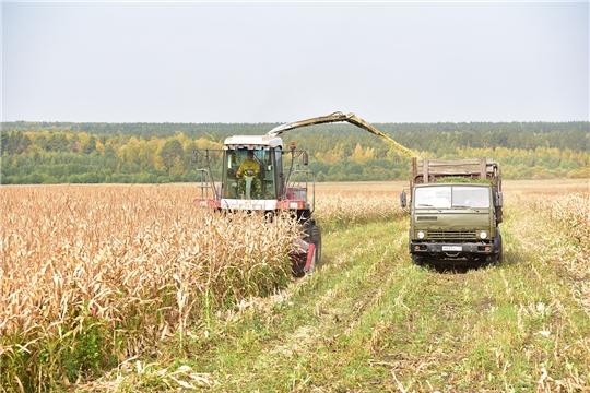 В Ибресинском районе приступили к уборке кукурузы на силос