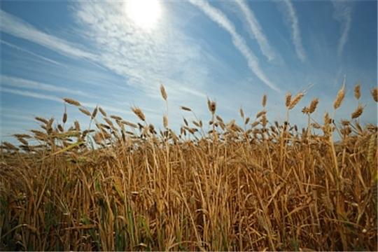 Чувашская Республика является лидером по доведению средств до аграриев