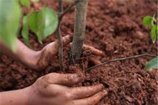 К лету 2020 года в рамках акции «Единой России» по лесовосстановлению будет высажено более миллиона деревьев