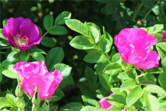 Новости поселений:важно обеспечить цветам постоянный уход и внимание