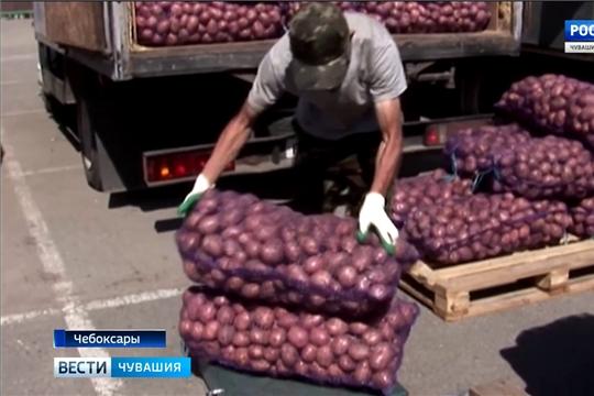 Горожане запасаются овощами на ярмарках сельхозпродукции