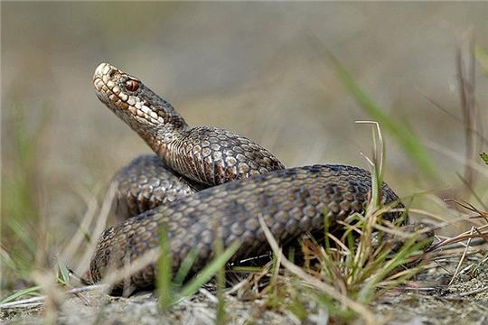 30 июля на Радио России слушайте о профилактике укусов змей