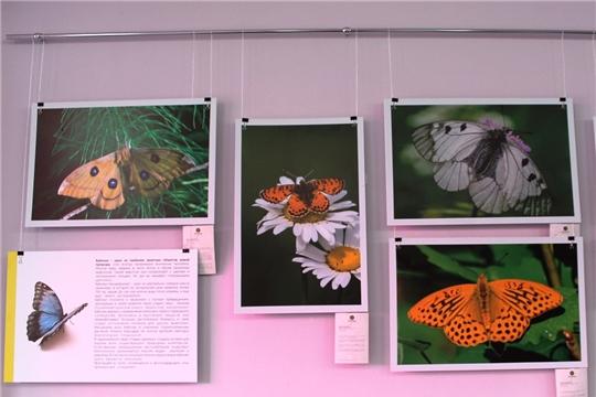 Крылатые фотовыставки в Национальной библиотеке Чувашии
