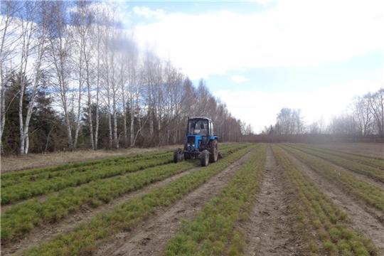 Более 450 гектаров новых лесных массивов появятся в республике (НТРК)