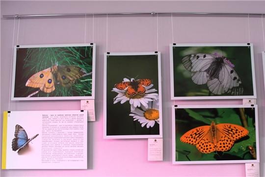 Крылатые фотовыставки ждут посетителей в Национальной библиотеке Чувашии