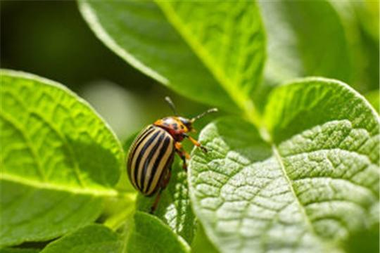 Ученые создали робота-фермера для борьбы с колорадским жуком