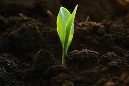 Компенсация ущерба от ЧС предоставляется только аграриям, застраховавшим посевы