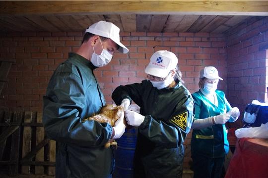 В республике идет работа по профилактике гриппа птиц