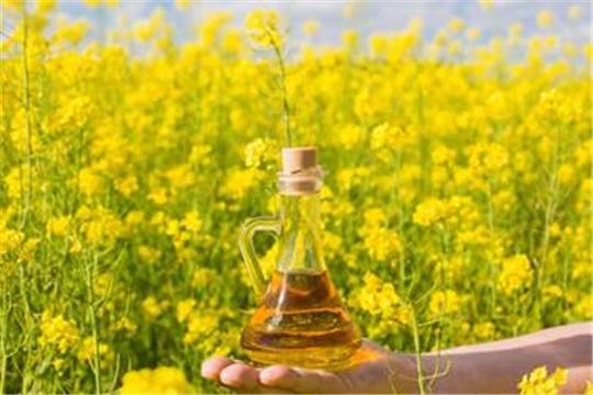В хозяйствах республики значительно увеличены площади сева масличных культур