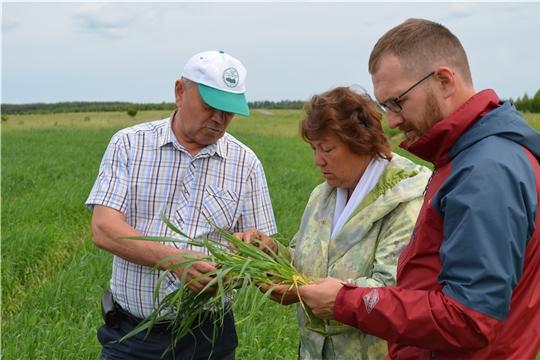 Аграрии Мариинско-Посадского района оценили качество ярового сева