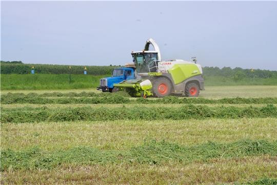 Погожие июньские дни благоприятны для роста многолетних трав и заготовки кормов.