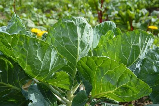 Чем отличается экологически чистая сельскохозяйственная продукция от органической?