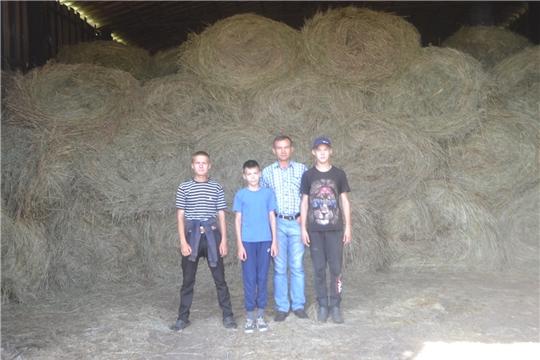 Школьники Канашского района помогают аграриям в заготовке кормов.
