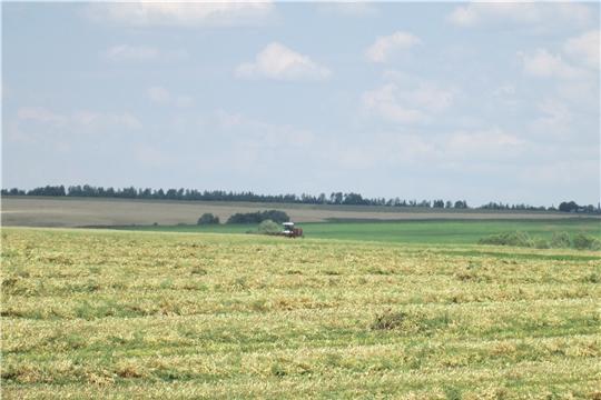 Хозяйства Яльчикского района первыми в республике приступили к уборке гороха и картофеля