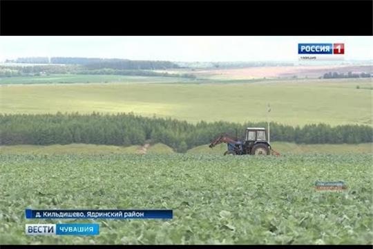 27 миллионов рублей потратил на систему мелиорации фермер из Ядринского района: вложения окупаются
