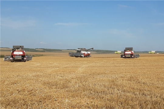 К уборке зерновых и зернобобовых культур приступили хозяйства 9 муниципальных районов республики