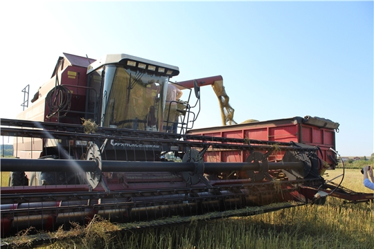 В хозяйствах Канашского района обмолочено 3700 га зерновых