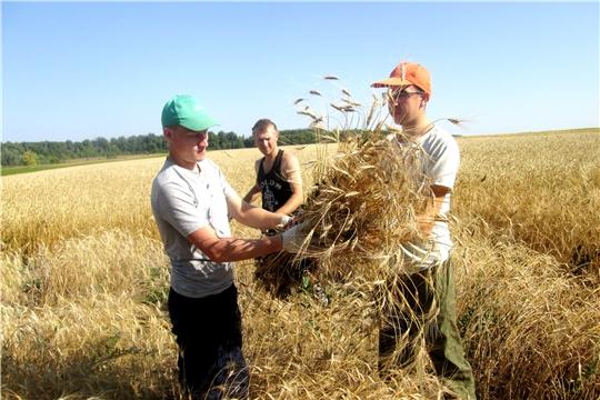 На полях учебного центра Чувашской ГСХА кипит работа по уборке урожая