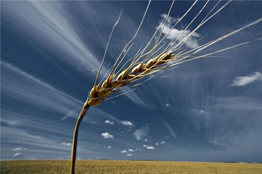Новый способ диагностики зерна позволяет осуществить экспресс-оценку жизнеспособности семян без разрушения зародыша