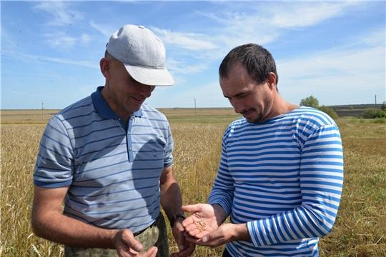 Аграрии Батыревского района завершают уборку зерновых