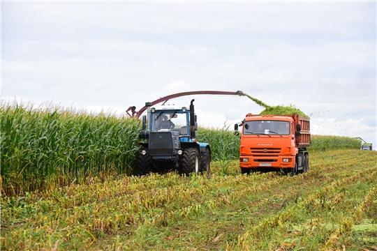 В Ибресинском районе продолжается уборка кукурузы на силос
