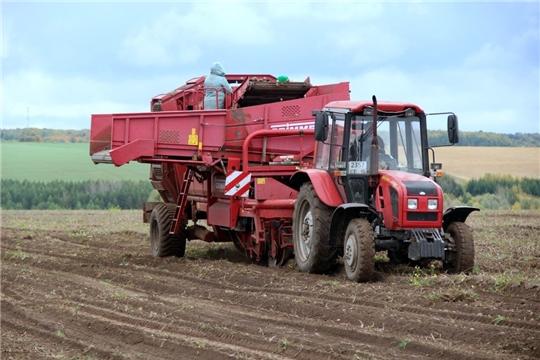 В хозяйствах Моргаушского района продолжается уборка картофеля