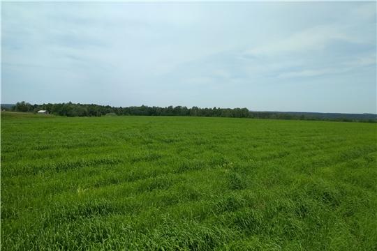 Проведена проверка целевого использования земель сельскохозяйственного назначения в Вурнарском районе