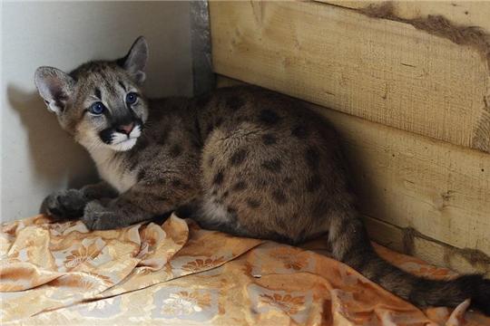 В России формируется правовая база в области обращения с животными