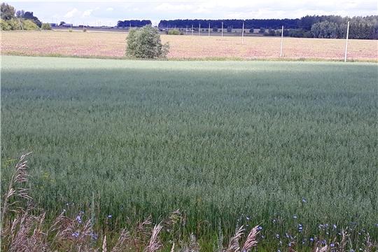 Проведена проверка целевого использования земель сельхозназначения в Чебоксарском районе