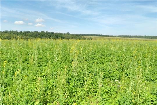 Проведена проверка целевого использования земель сельхозназначения в Чебоксарском и Красноармейском районе