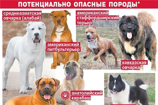 Определен перечень потенциально опасных собак