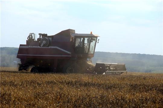 Средняя урожайность зерновых в «Ударнике» -33,1ц. с га