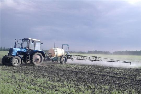 В Шемуршинском районе весенние полевые работы завершаются