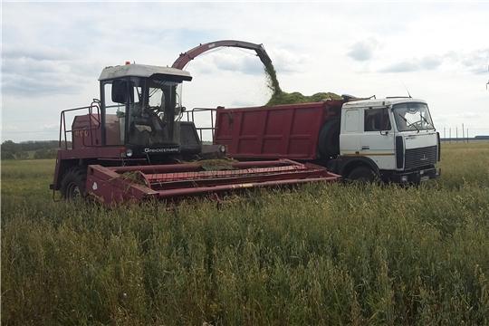 В хозяйствах Шемуршинского района работы по заготовке кормов продолжаются
