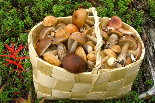 Осторожно, грибы!
