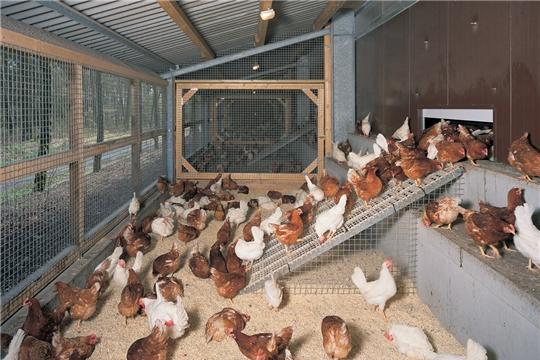 Рекомендации по содержанию домашней птицы на личных подворьях