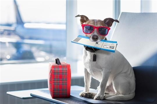 Отправляемся в отпуск вместе с домашними животными!