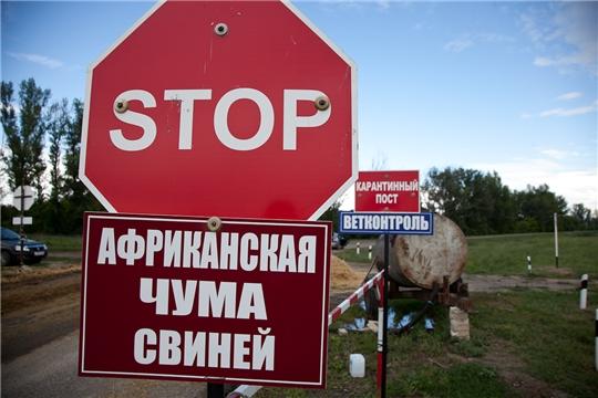 О регистрации африканской чумы свиней в Ульяновской области