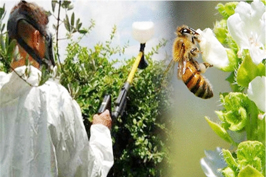 Мероприятия для предупреждения отравления пчел пестицидами