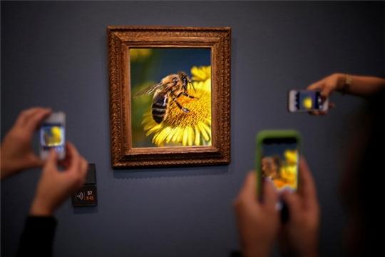 Исчезающий вид. Как спасти от ядохимикатов людей и пчёл (Ветеринария и Жизнь)