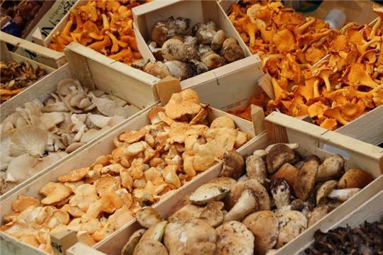Как правильно выбрать грибы